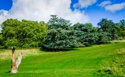 Park-toter Baum Londons lizenzfreie stockfotografie