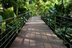 Park Trail. Walk path in Singapore Botanic Garden park trail Royalty Free Stock Image