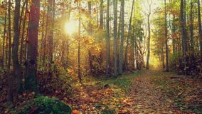 Park trail in the autumn with sun rays. In autumn day stock footage