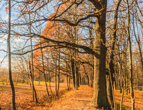 Park trail on late autumn good for  wallpaper. Horizontal photo, photo took in Moscow, Russian, photo is usable on picture post card, calendar, gardening Stock Images