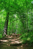 Green Forest Trail Royalty Free Stock Photos