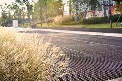 Park trail in the sunset, blooming foxtail stock photos