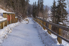 Park trail in winter, Edmonton, Alberta Royalty Free Stock Photo
