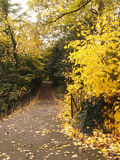 Park Trail and Yellow Autumn Leaves Stock Image