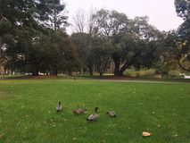 Park travel. Ducks family and lunc Stock Image
