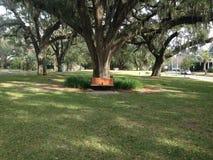Park. Tree in park Stock Photo