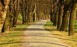 The park. Tree alley in sunny park Stock Image