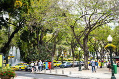 Park in the Tree Lined Main Shopping Streets in Funchal Madeira Portugal. Close by the market are the main shopping streets, pedestrian areas and the Cathedral stock photos