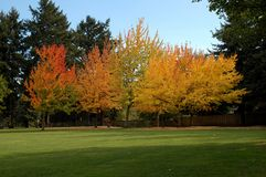 Park Trees. Beautiful trees in seasonal transition royalty free stock photography
