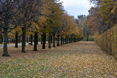 Park trees Stock Photography