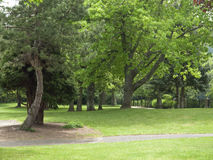 Park and trees. Stock Photo