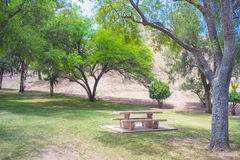 Park Trees Above Picnic Table Royalty Free Stock Image