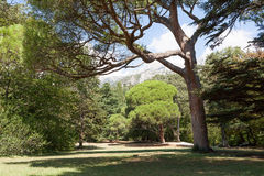 Park with trees against mountains in summer day Royalty Free Stock Image