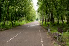 Park trees alley. Summer in the park trees alley royalty free stock photos