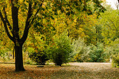 Park with trees and bushes in the autumn Stock Photos