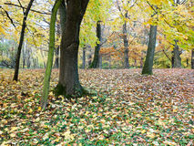 Park with trees and carpet from leaves Royalty Free Stock Photography