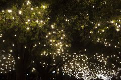 Park trees covered with bulb string lights.