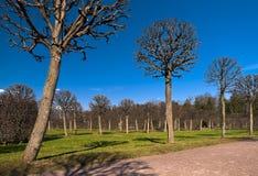 Park trees Stock Photos