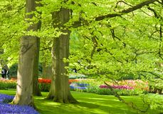 Park with trees and flowers. Park with beech trees and flowers in spring time Royalty Free Stock Photos