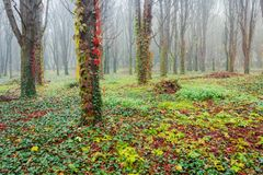 Park with trees in fog. Creepy scenery in late autumn stock photography