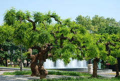Park with trees and a fountain Stock Image