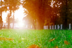 Park trees grass background Stock Photo