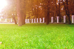 Park trees grass background Stock Photography