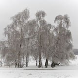 Park with  trees in ice. Stock Image