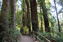 Park Trees of Mystery. Trail in park Trees of Mystery in California, USA Stock Photo