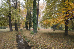 Park with trees and small creek in the fall Stock Images