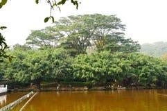 Park trees Stock Photo