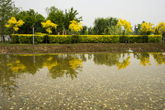 The park trees, water, plants and the reflection i Royalty Free Stock Photos