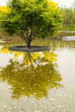 The park trees, water, plants and the reflection i Stock Image