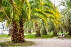 Park with tropical palms Stock Image