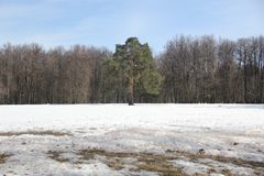Park ` Tsaritsyno` stock image