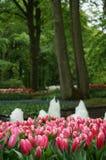 Park tulipany Zdjęcia Stock