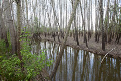 Park tun caminho fundo, Portugal Lizenzfreies Stockbild