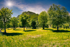 Park in typical italian village Stock Photography