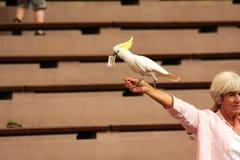 Park van de Jurongvogel, Singapore-2008 Kaketoe (Cacatuinae) met een bil Stock Foto
