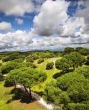 Park van Madrid en vliegende wolken Royalty-vrije Stock Fotografie