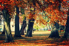 Park. View of autumn in the park Stock Photo