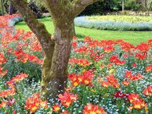 Park view. Garden scene. tulips. landscape. flower beds Royalty Free Stock Images