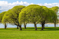Park view with green trees Stock Image