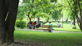 Park View. People sitting on benches in park, resting an relaxing with clean air, fresh green vegetation, on summer afternoon stock footage