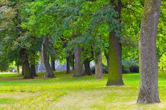 Park. View of the trees in the park Royalty Free Stock Image