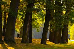 Park. View of the trees in the park Royalty Free Stock Photography