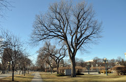 Park. View of the park in Winnipeg City, Manitoba province, Canada. The photo was taken in November 2013 Stock Photos