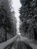 Park in the village of Komarovo. Stock Image