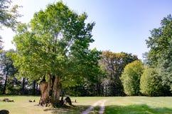 Park von Muskau, ckler-parco del ¼ del rst-PÃ del ¼ del lub FÃ del parco di Muskauer, akowski del ¼ di MuÅ del parco immagini stock libere da diritti