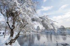 Park während eines kalten Wintertages Stockfotos